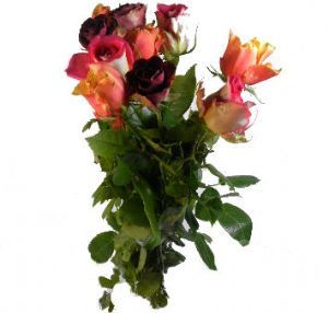 Bouquet 10 Roses multicolores 40cm